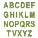 草的字母表 库存照片