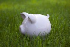 绿草的存钱罐 免版税库存图片
