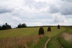 绿草的干草堆 库存图片