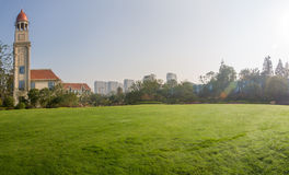 草的庭院 库存照片