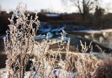 草的弗罗斯特在冬天 免版税库存照片