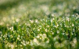 草的抽象梦想和被弄脏的图象与太阳火光的 露水下落 库存图片