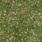 草的方形的无缝的纹理与秋天的 库存照片