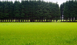 草的树丛 库存照片