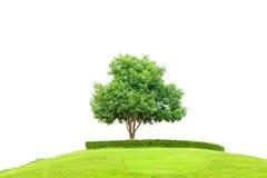 草的树和领域在小山的在白色背景的成功概念的与裁减路线 库存照片