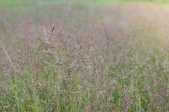 草的狂放的领域在日落的,软的太阳发出光线,温暖 免版税库存照片