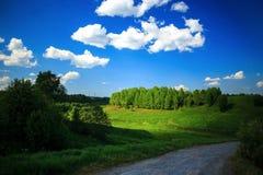 绿草的领域和完善的天空和树 图库摄影