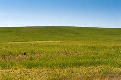 草的领域 库存图片