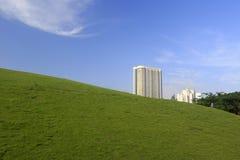 草的领域 库存照片