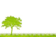 从草的绿色树自然有白色背景 免版税库存图片
