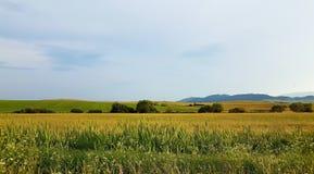 草的黄色领域与蓝天和山的在背景中 小树,夏时 库存照片