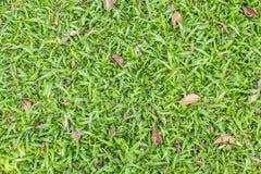草皮研与干燥叶子 免版税库存图片