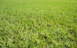 草皮领域背景 免版税库存图片