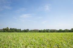 草皮领域背景 免版税库存照片