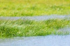 草秀丽在湖 免版税图库摄影