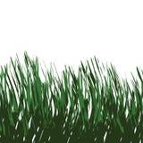 草绿色向量 皇族释放例证