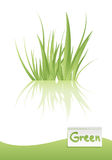 草绿色向量 库存例证