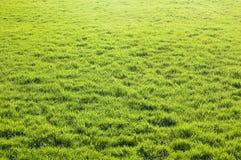 草绿色地产 库存图片
