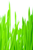 草绿色垂直 库存照片