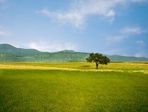 草绿色天空结构树 免版税库存照片