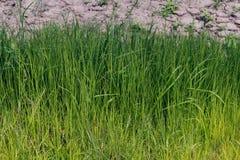 草绿色新看的样式 美好和平静的自然背景 免版税库存图片
