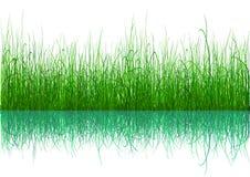 草绿色查出的白色 库存照片