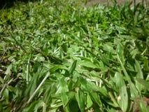 草绿色横向 库存照片