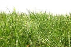 草绿色照片 免版税库存照片