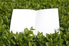 草绿色纸张 库存图片
