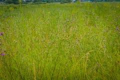 草绿色草坪 免版税图库摄影