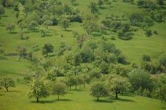 草绿色草甸结构树 库存照片