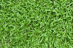 草绿色表面 免版税库存图片