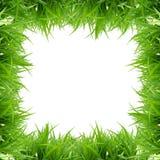 草绿色 库存图片