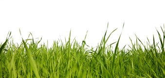草绿色 免版税库存图片