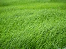 草绿色 免版税图库摄影