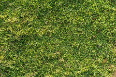 绿草背景 库存图片