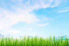 绿草背景 免版税库存图片