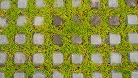 绿草自然背景纹理 图库摄影