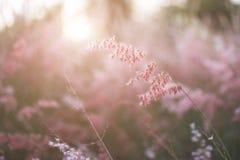 草花剪影有日落背景,颜色覆盖了样式 图库摄影
