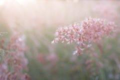 草花剪影有日落背景,颜色覆盖了样式 免版税库存图片