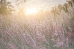 草花剪影有日落背景,颜色覆盖了样式 库存图片