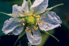 草花在庭院里 图库摄影