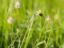 草花在庭院里 免版税库存照片