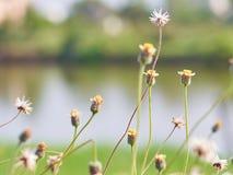 草花在庭院里 库存照片
