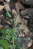 草花在森林里 免版税图库摄影
