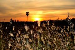 草花有树和日落一个黑剪影  免版税库存照片