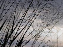 草花的阴影有日落背景 免版税库存图片