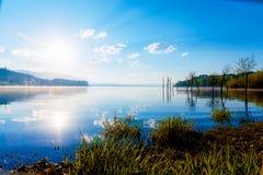 草茎细节在一个湖的与破晓的太阳的不可思议的早晨时间的 作为痣的残羹剩饭的树 免版税库存照片