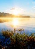 草茎细节在一个湖的与破晓的太阳的不可思议的早晨时间的 图库摄影