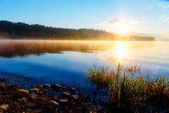 草茎细节在一个湖的与破晓的太阳的不可思议的早晨时间的 免版税图库摄影
